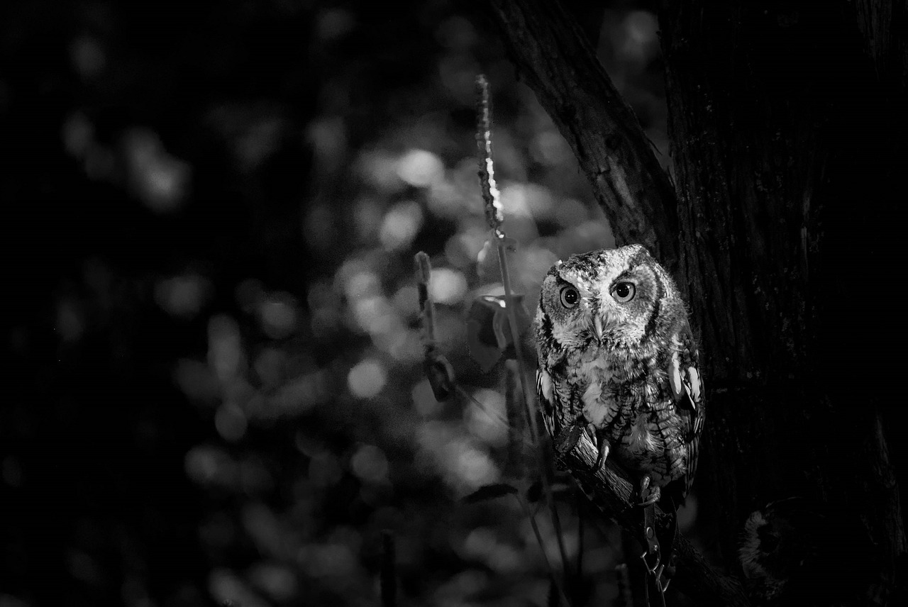 How Night Owls Can Thrive in 9-to-5 Life